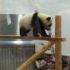 パンダを見に行きました